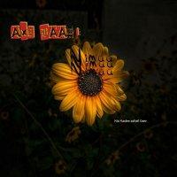Nimaa - 'Axe Baadi'