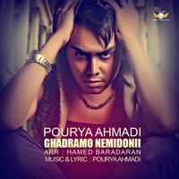 Pourya Ahmadi - 'Ghadramo Nemidooni'